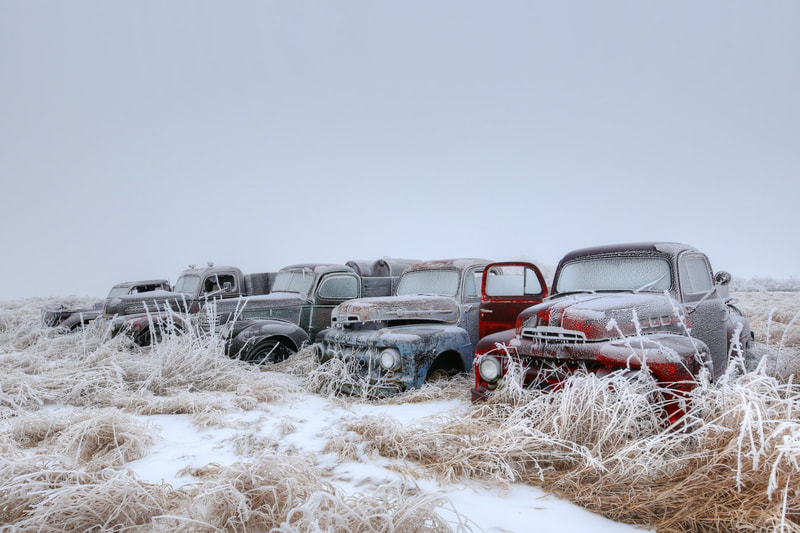 A row of old Ford trucks that are abandoned in Southern Saskatchewan.